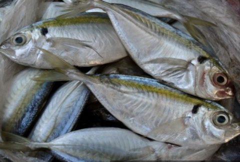 #GiziLokal: 8 Manfaat Kesehatan Ikan Selar, Mari Makan!